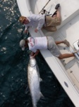 Tarpon that abused Dustin for about an hour, ended up getting handled Team CT Style.  6'long  200+ lbs, light tackle.. Longboat Key, Fl