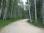 Aspen stand in northern Co.